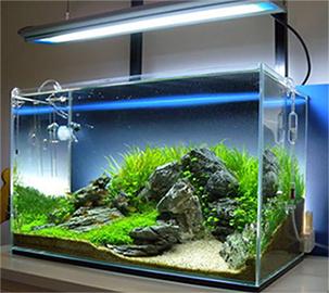 Можно ли выращивать аквариумные растения без co2?