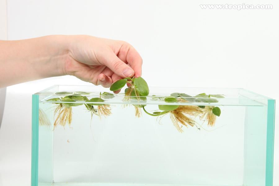 Как сажать аквариумные растения без корней 95
